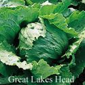Picture of Lettuce, Great Lakes Head
