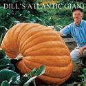 Picture of Pumpkin, Dill's Atlantic Giant