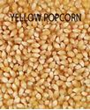 Picture of Popcorn, Purdue 410 Yellow Popcorn