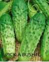 Picture of Cucumber, Pick A Bushel