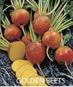 Picture of Beets, Burpee Golden