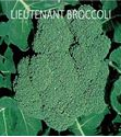 Picture of Broccoli,Lieutenant Hybrid