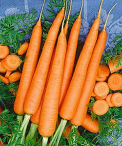 Picture of Carrot,TenderSweet