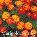 Picture of Marigold, Sparky