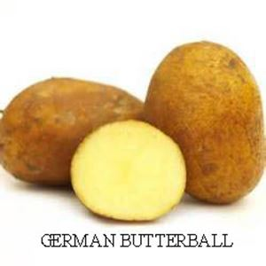 Picture of Potato, German Butterball