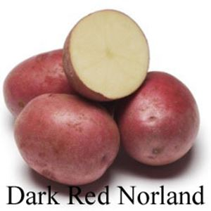 Picture of Potato, Red Norland