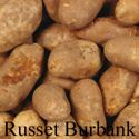 Picture of Potato, Russet Burbank