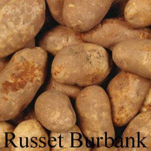 Picture of Potato, Russet Burbank