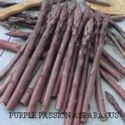 Picture of Asparagus, Purple Passion 2 Year Roots