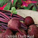 Picture of Beets, Detroit Dark Red