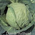 Picture of Cabbage, Danish Ballhead