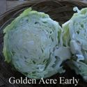 Picture of Cabbage, Golden Acre Early