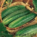 Picture of Cucumber, Straight Eight