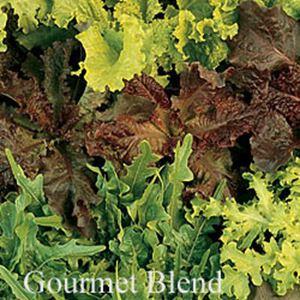 Picture of Lettuce, Gourmet Blend Leaf
