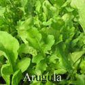 Picture of Greens, Rocket Arugula