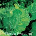Picture of Mustard, Florida Broadleaf