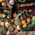 Picture of Gourds, Large Fruited Mixture