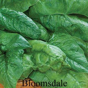 Picture of Spinach, Bloomsdale