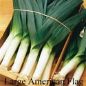 Picture of Leek, Large American Flag