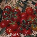 Picture of Tomato, Red Cherry