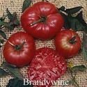 Picture of Tomato, Brandywine
