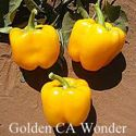 Picture of Pepper, Golden CA Wonder Sweet