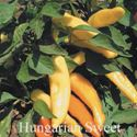 Picture of Pepper, Hungarian Yellow Wax Sweet
