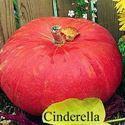 Picture of Pumpkin, Cinderella