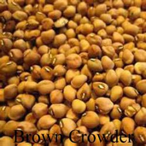 Picture of Cowpea, Brown Crowder, MS Silver