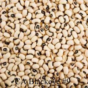 Picture of Cowpeas, CA Blackeye