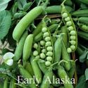 Picture of Shell Peas, Early Alaska