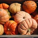 Picture for category Pumpkins