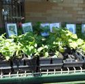 Picture for category Vegetable Planting