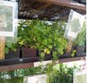 Picture for category Herb Planting