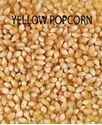 Picture of Popcorn, Purdue 410 Yellow Popcorn