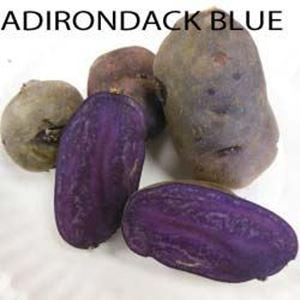 Picture of Potato, Adirondack Blue