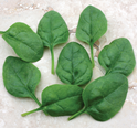 Picture of Spinach, Edna Hybrid